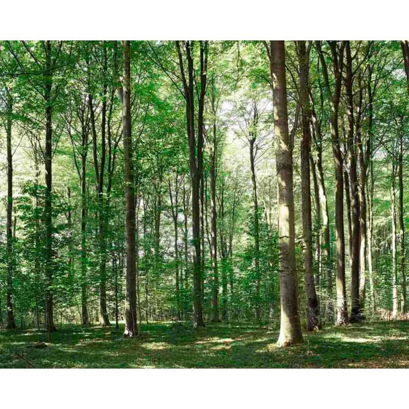 Forêt Damsbo